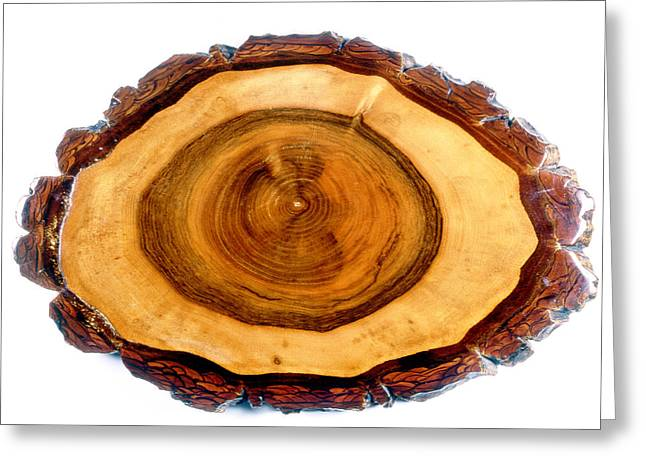 Regia Greeting Cards - Walnut Tree Trunk Greeting Card by Dr Keith Wheeler