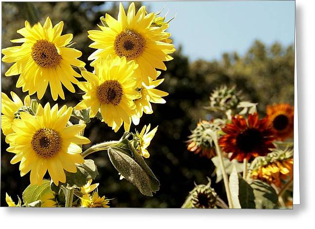 Gaston County Photographs Greeting Cards - Waltz  Greeting Card by Tammy Cantrell
