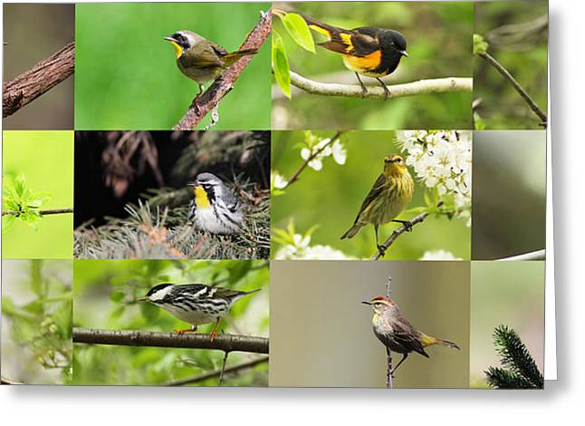 Setophaga Magnolia Greeting Cards - Warblers in spring Greeting Card by Mircea Costina Photography