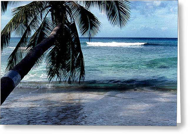 WARM WATER SHADE Greeting Card by Skip Willits