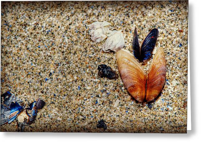 Warm Summer Greeting Cards - Washed Up Greeting Card by Lisa Knechtel