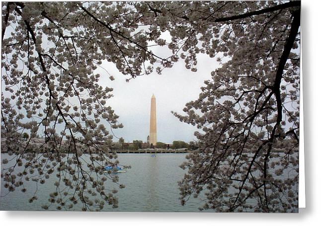 Cherry Blossom Festival Greeting Cards - Washington Monument Greeting Card by Joyce Kimble Smith