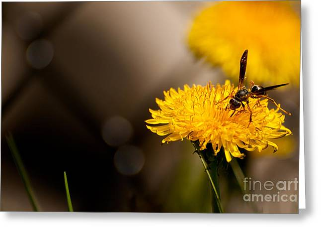 Catalog Greeting Cards - Wasp and Flower  Greeting Card by Venura Herath
