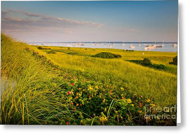 Eastern American Beach Grass Greeting Cards - Watch Hill Sunrise Greeting Card by Susan Cole Kelly