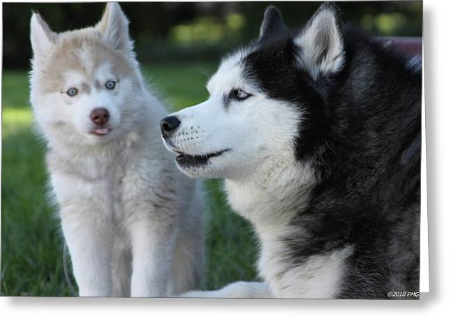 Husky Greeting Cards - Watch It Kid Greeting Card by Patrice Geist