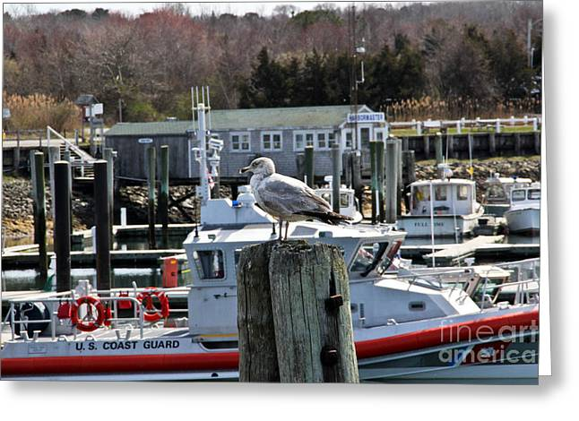 Boats In Harbor Greeting Cards - Watchful Greeting Card by Extrospection Art