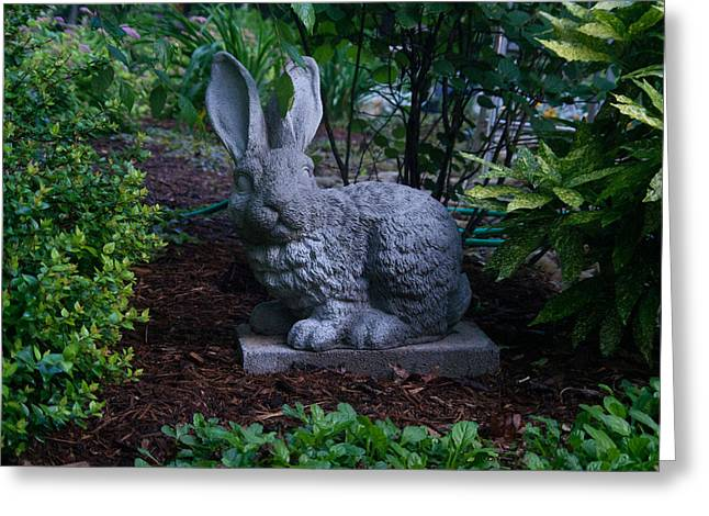 Watchful Greeting Cards - Watchful Rabbit Greeting Card by Douglas Barnett