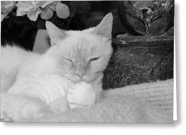 Siamese Cat Greeting Card Greeting Cards - Watchful Slumber Greeting Card by Connie Levien