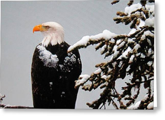 Watching Over the U.S.A. Greeting Card by Shawn Hughes