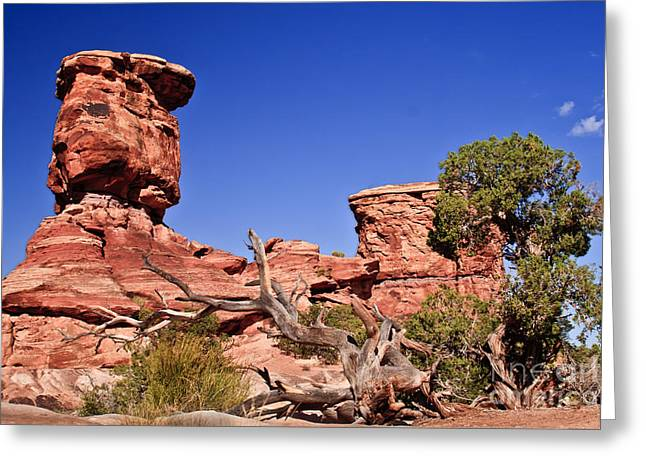 The Plateaus Greeting Cards - Watching Greeting Card by Robert Bales