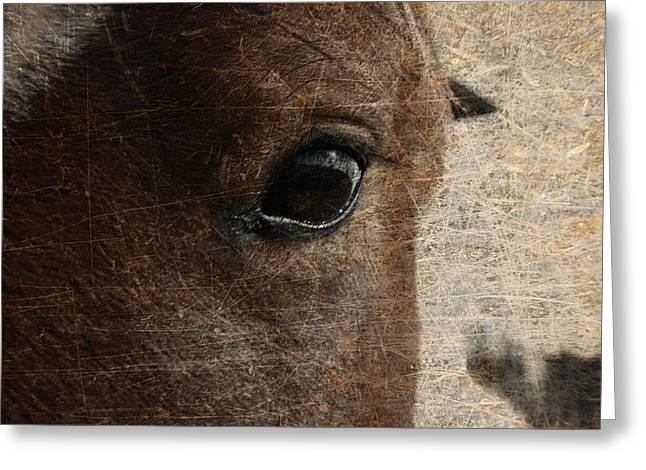 Horse Images Greeting Cards - Watching Greeting Card by Toni Hopper
