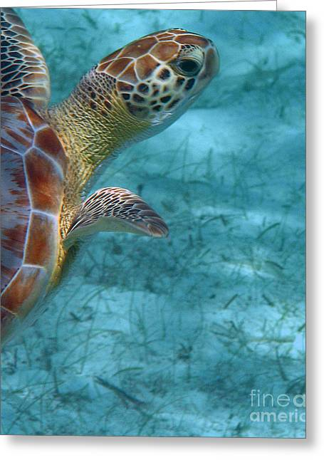 Undersea Photography Greeting Cards - Watching You Watching Me Greeting Card by Li Newton
