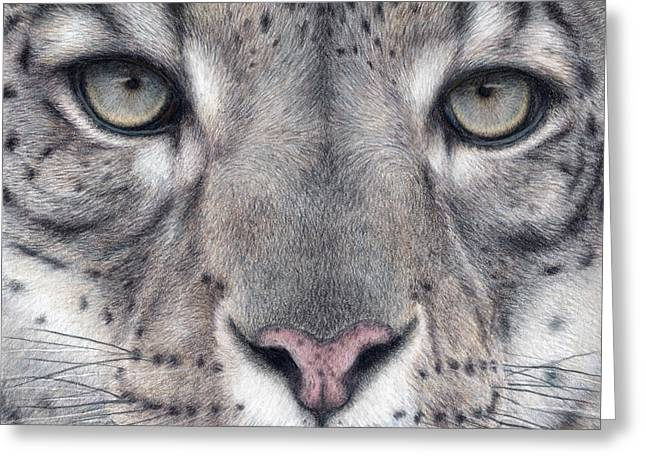 Leopard Drawings Greeting Cards - Watching You...Snow Leopard Greeting Card by Pat Erickson