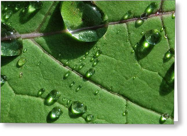Waterdrop Greeting Cards - Water and Light Greeting Card by Marilynne Bull