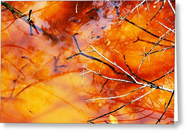 Florida Swamp Reflection Greeting Cards - Water Color over Sand Bottom Greeting Card by Peter  McIntosh
