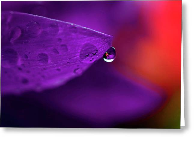Card Stock Greeting Cards - Water Drop Reflections With Purple II Greeting Card by Laura Mountainspring