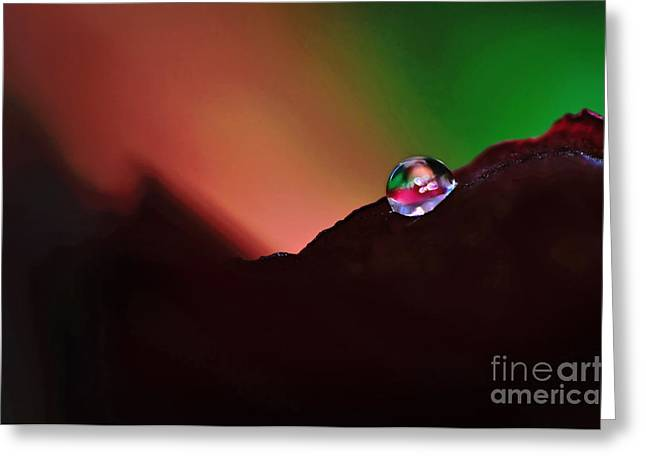 Petals With Droplets Greeting Cards - Water Droplet at Dusk Greeting Card by Kaye Menner