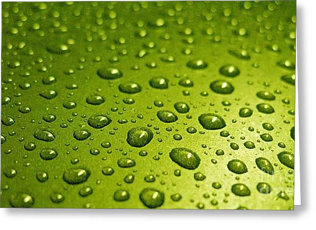 Customizable Greeting Cards - Green Card. Macro Photography Series Greeting Card by Ausra Paulauskaite