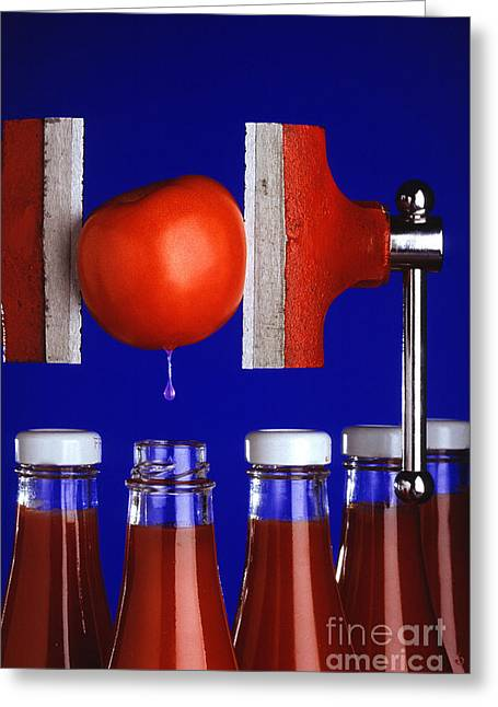 Water Extraction From Tomato Greeting Card by Photo Researchers