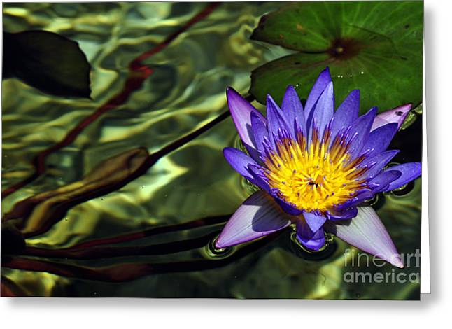 Bruster Greeting Cards - Water Floral Greeting Card by Clayton Bruster