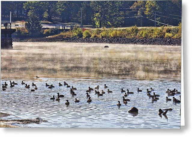 Water Fowl Photographs Greeting Cards - Water Fowl at Lake Wilhelmina Arkansas Greeting Card by Douglas Barnard