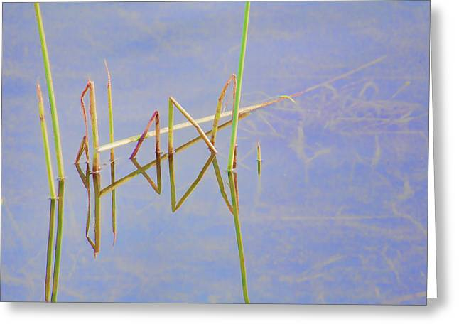 Reflective Water Greeting Cards - Water Garden 5 Greeting Card by Bonnie Bruno