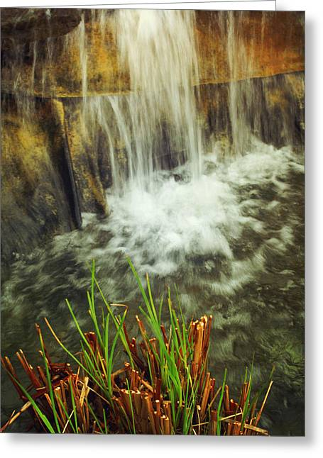 Water Garden Greeting Cards - Water Garden  Greeting Card by Toni Hopper
