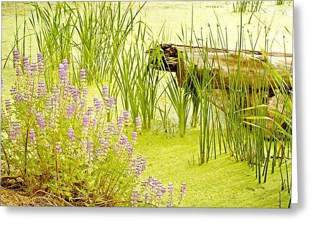 Soft Light Greeting Cards - Water Gardens Greeting Card by Bonnie Bruno
