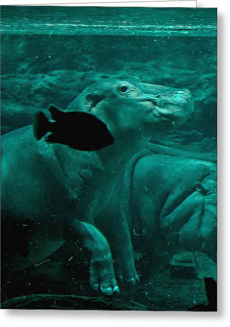 Hippopotamus Digital Art Greeting Cards - Water Horse Ballet Greeting Card by DigiArt Diaries by Vicky B Fuller