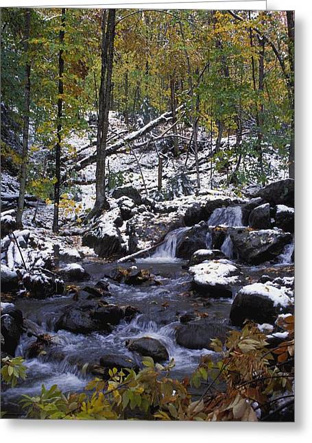 Rush-bed Greeting Cards - Water In Forest Greeting Card by David Chapman