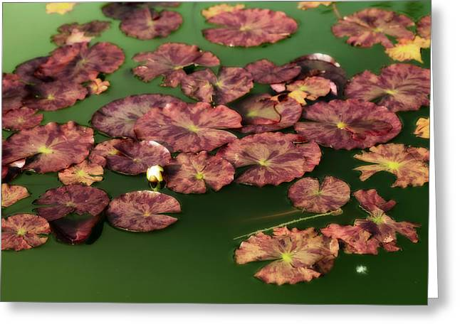 Edge Mixed Media Greeting Cards - Water Lilies Greeting Card by Bonnie Bruno