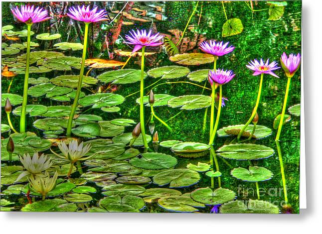 Jefferson Greeting Cards - Water Lilies Greeting Card by David Bearden