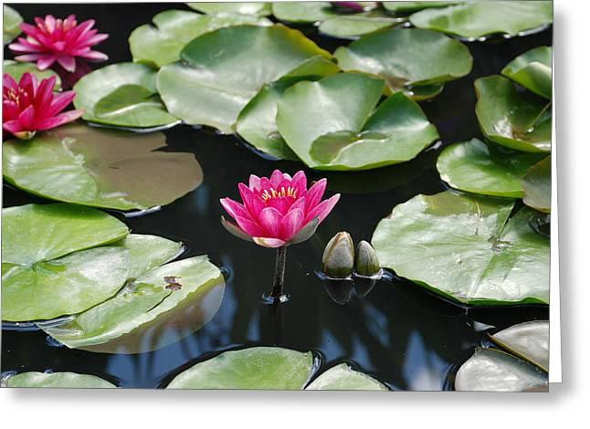 Water Lilies Greeting Card by Jennifer Lyon