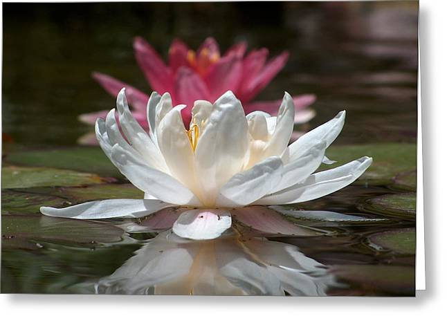 Gt Greeting Cards - Water lillies Greeting Card by Gt