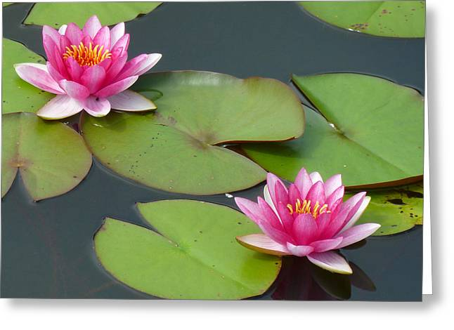 Water Lilly Greeting Cards - Water Lillies Greeting Card by Tim Nyberg