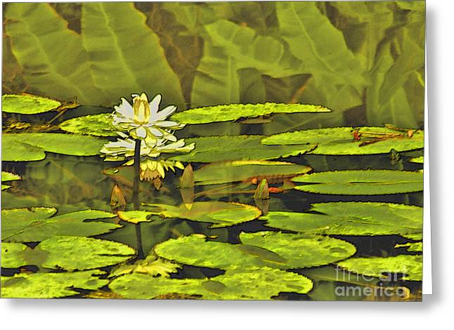 Water Lilly Greeting Cards - Water Lilly Greeting Card by Peggy Starks