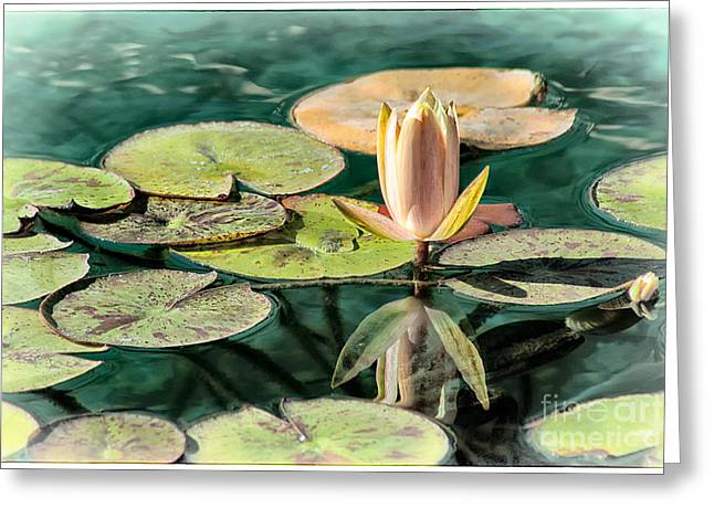 Jak Of Arts Photography Greeting Cards - Water Lily Bud Greeting Card by Jak of Arts Photography