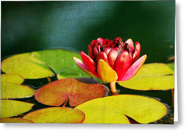Aquatic Greeting Cards - Water Lily II Greeting Card by Darren Fisher