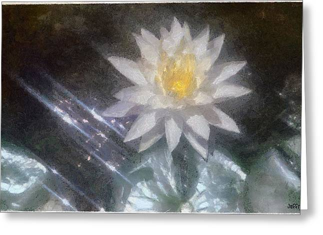 White Waterlily Greeting Cards - Water Lily in Sunlight Greeting Card by Jeff Kolker