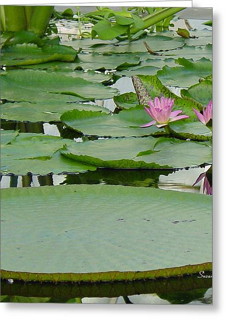 Water Scape Greeting Cards - Water Lily Land II Greeting Card by Suzanne Gaff