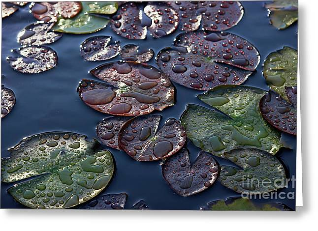 Nymphaea Plants Greeting Cards - Water Lily Leaves Greeting Card by Susan Isakson
