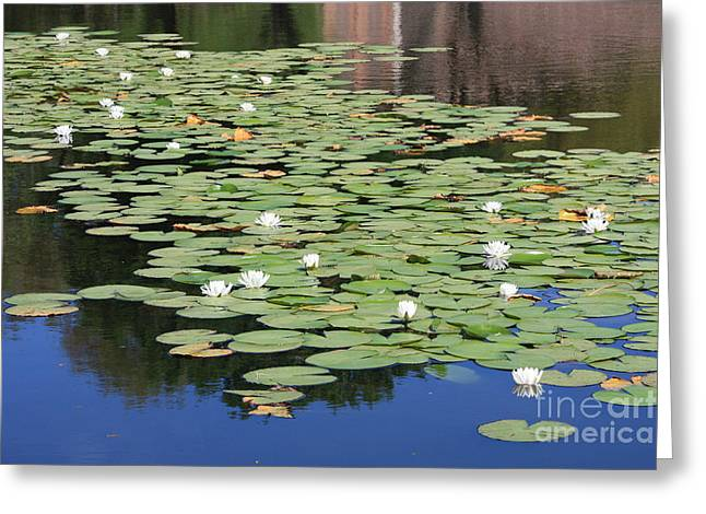 Reflection On Pond Greeting Cards - Water Lily Pond Greeting Card by Carol Groenen