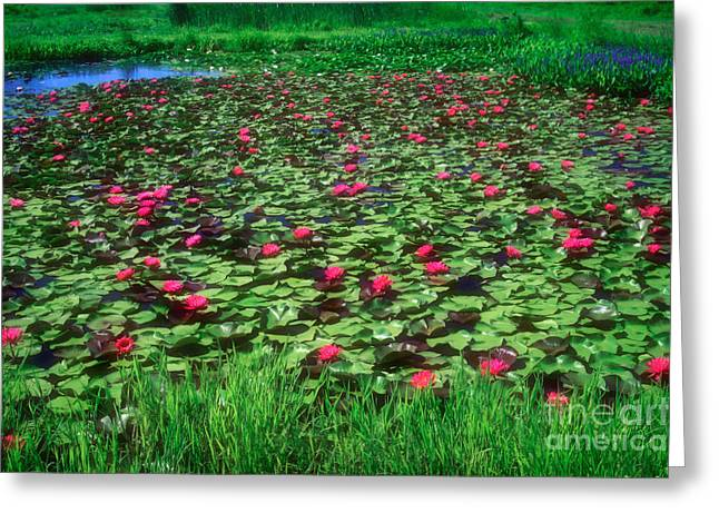 Moist Greeting Cards - Water Lily Pond Greeting Card by Susan Isakson