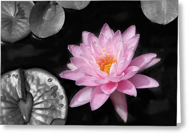 Aquatic Greeting Cards - Water Lily Greeting Card by Rudy Umans