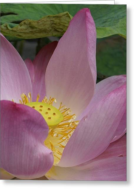 Shower Head Greeting Cards - Water Lily Shower Head Greeting Card by Gregory Smith
