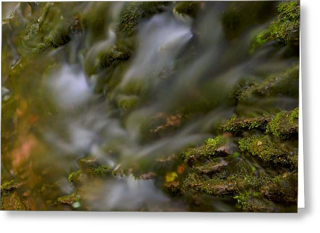 Stokes State Forest Greeting Cards - Water Movement 19 Greeting Card by Stephen  Vecchiotti