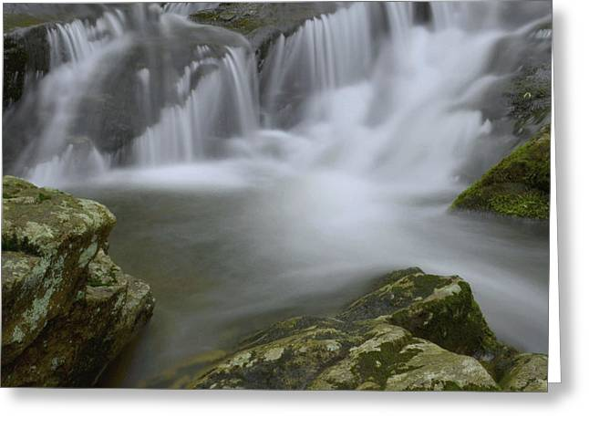 Stokes State Forest Greeting Cards - Water Movement 62 Greeting Card by Stephen  Vecchiotti