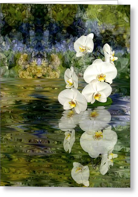 Tom Romeo Greeting Cards - Water Orchid Greeting Card by Tom Romeo