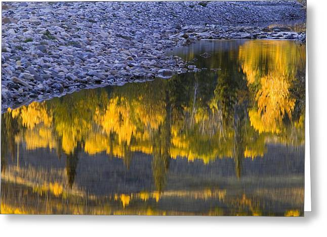 Trees Reflecting In Water Greeting Cards - Water Reflections With A Rocky Shoreline Greeting Card by Carson Ganci