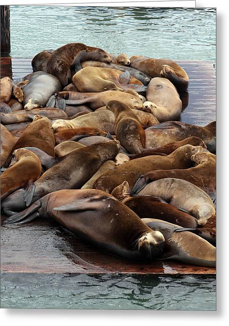 Recently Sold -  - California Sea Lions Greeting Cards - Water Setters Greeting Card by Ty Helbach